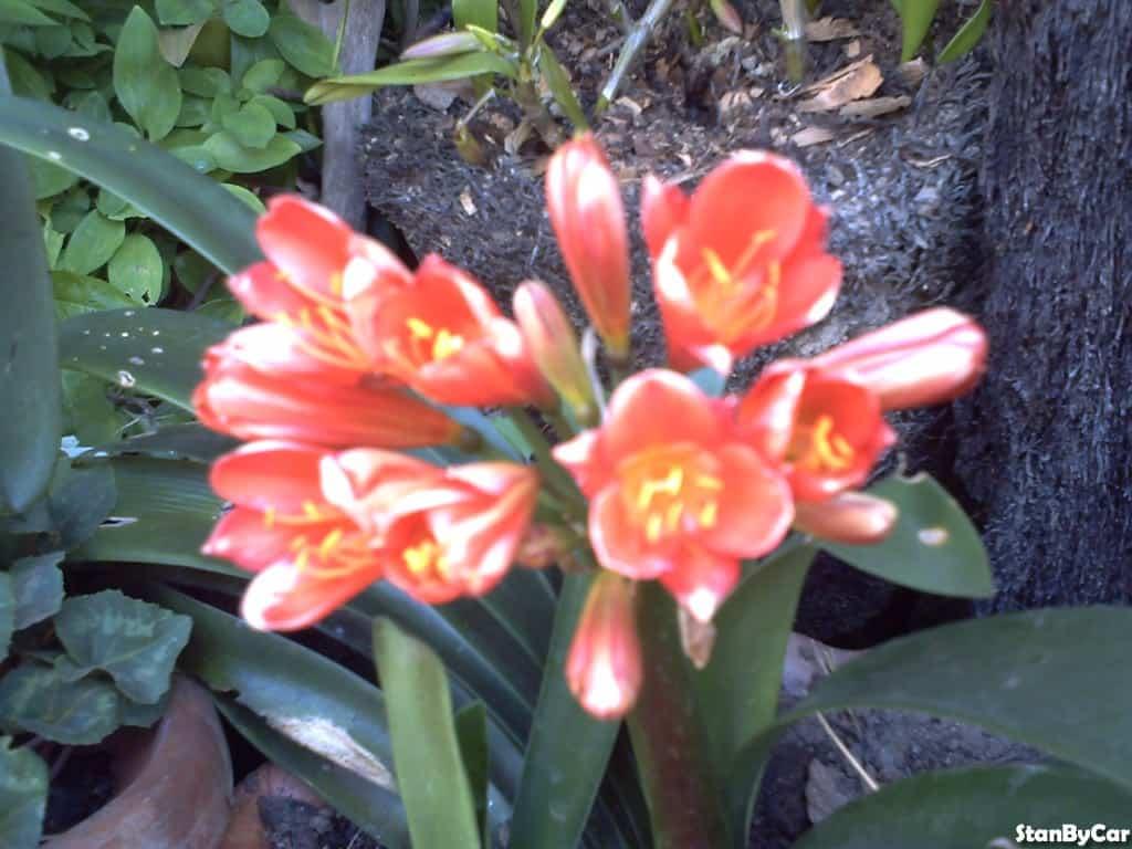 ORCHIDEE (4)