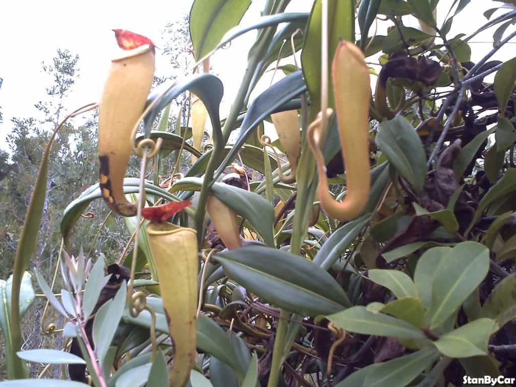 ORCHIDEE (6)